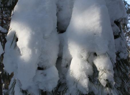 Winter Shines