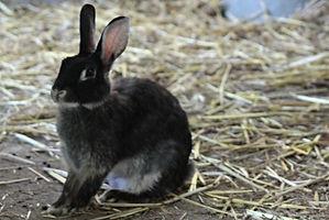 De Eenhoorn Dierenhomeopathie Zeeland in Kapelle consulten in Zuid-West Nederland door Annet Hannewijk. Homeopathie voor konijn.