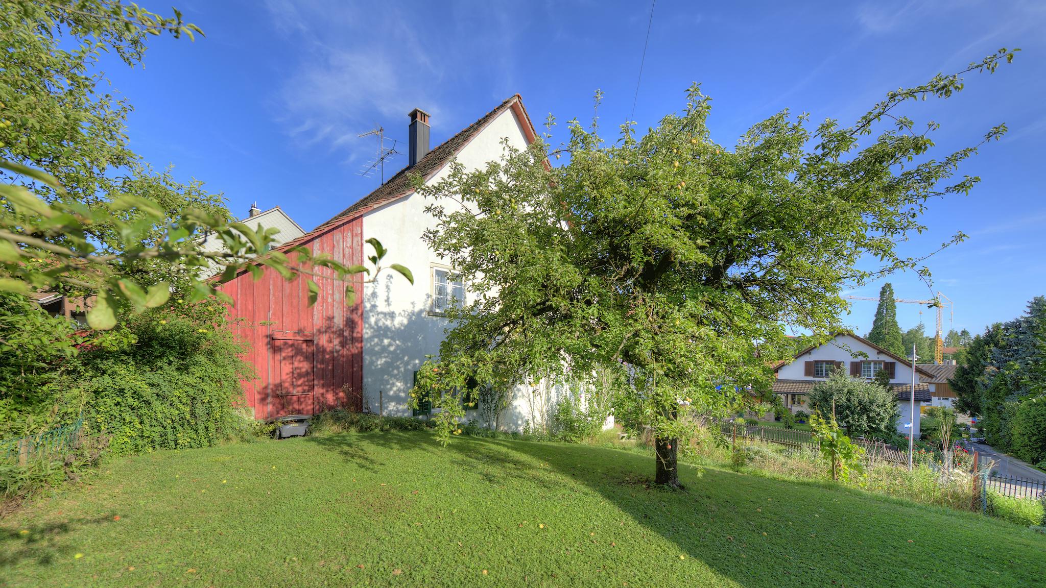 Die Obstbäume neben dem Haus