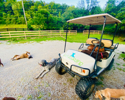 golf cart silly dogs