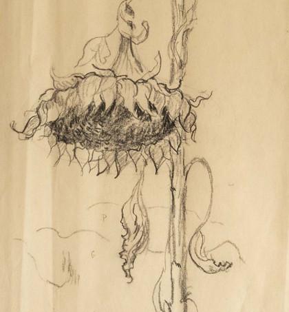 'Still Life Sketch'