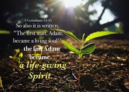 Why  Was Jesus Called the Last Adam?