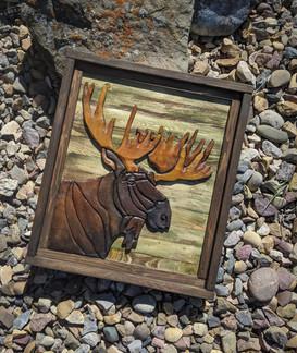 Moose - 130$