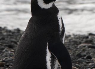 De delfines a pingüinos