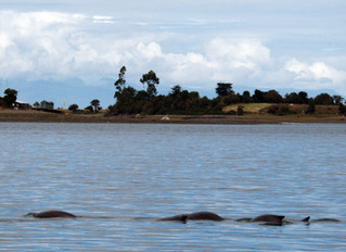 Some porpoises for happiness