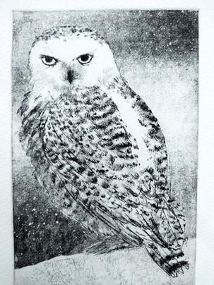 Sheila Roberts Snowy Owl,.jpg