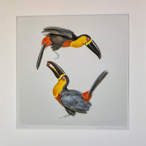 Print of Arial Toucans