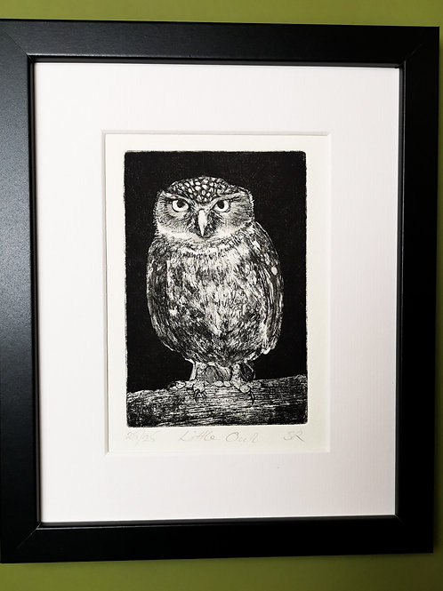 Little Owl Etching
