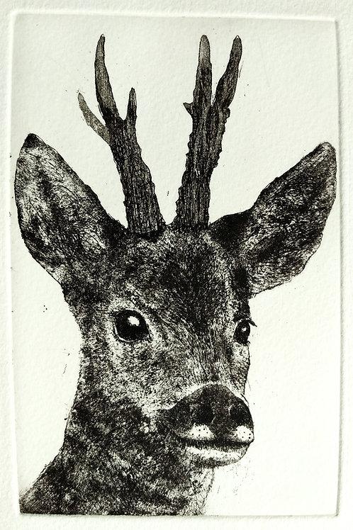 Roe Deer Etching