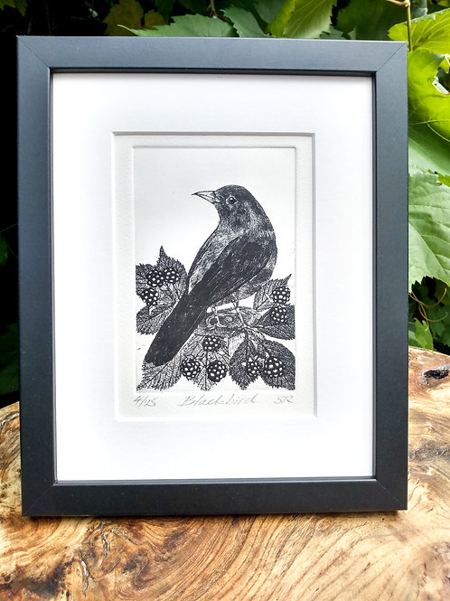 Blackbird Etching
