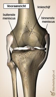 knie illustratie met meniscus vooraanzicht