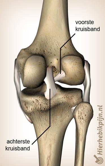 Kniebanden illustratie voor fysiotherapie