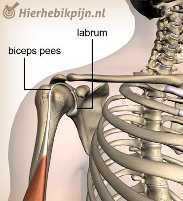 schouder-labrum-bicepsjpg