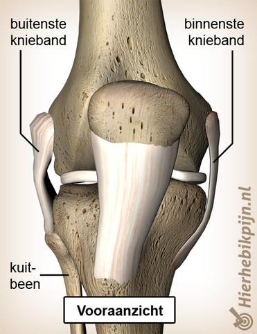 Illustratie Vooraanzicht van knie met aanduidingen op kniebanden