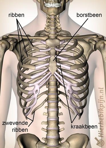 ribbenkast illustratie vooranzicht voor fysiotherapie