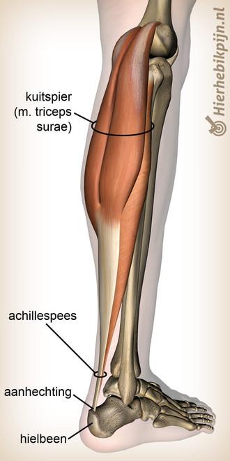onderbeen-triceps-surae-kuitspier-achill