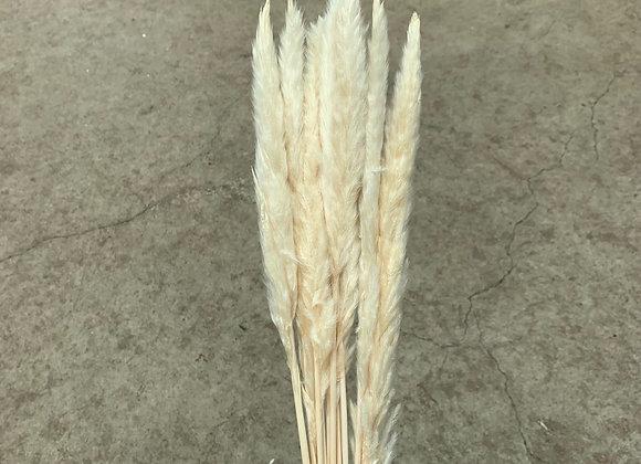 Pampasgras 75cm White