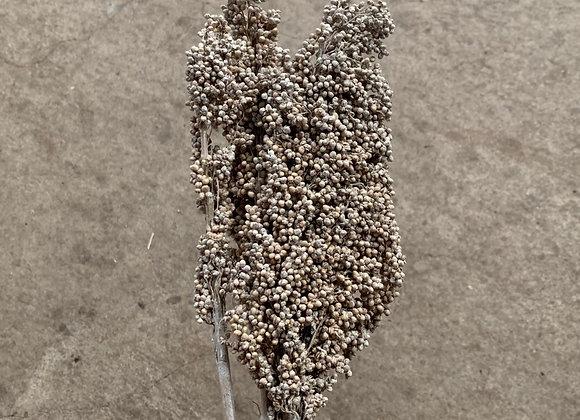 Indian Corn White Washed
