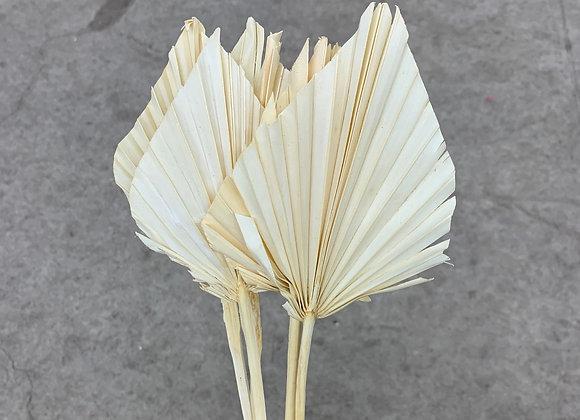 Palm Spear weiß