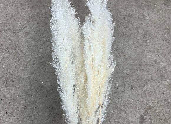Pampasgras fluffy weiß