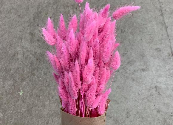 Lagurus pink