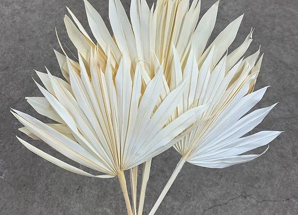 Palm Sun Spear weiß