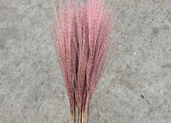 Miscanthus Light Pink