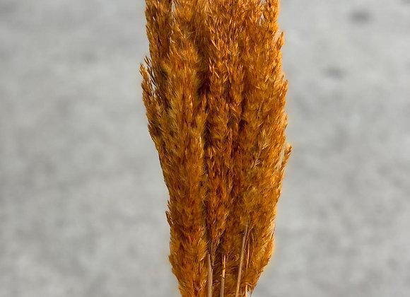 Plume Reed Orange