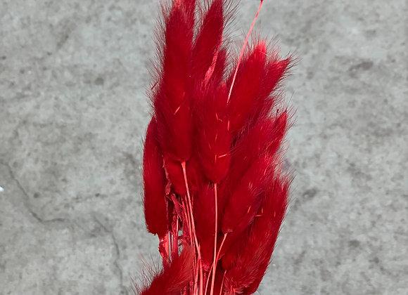 Lagurus rot