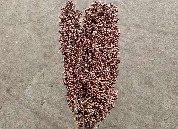 Indian Corn Old Pink-Wash