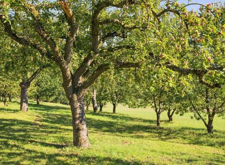 Jak wybrać sadzonki drzew i krzewów owocowych?