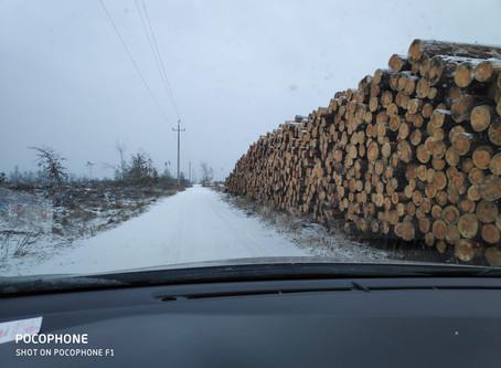 """Zimowe spojrzenie na """"lasy"""""""