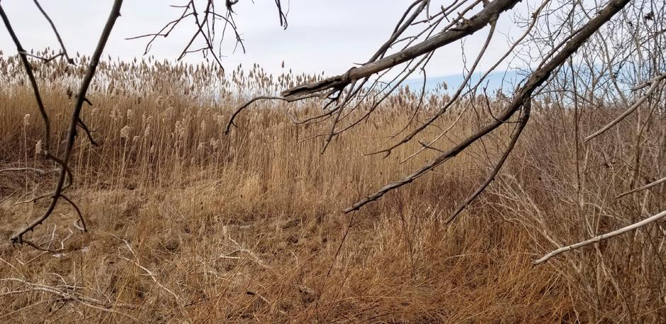 Laura Secord Trail