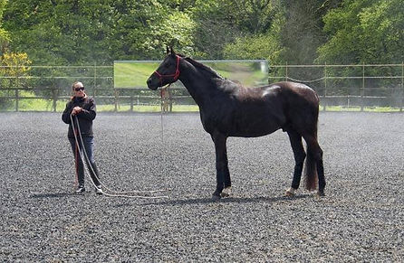 Steph with horse on line.jpg