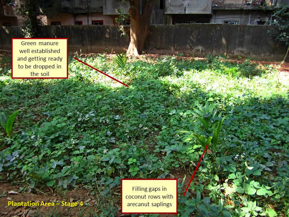Using weeds or green manure crops to improve soil nutrients