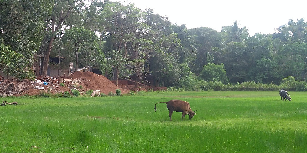 Workshop: Designing for Success and Sustainability on New Farms (at Bangalore)