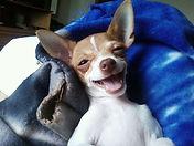 dr marcin's dog