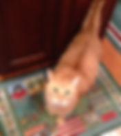 dr marcin's cat