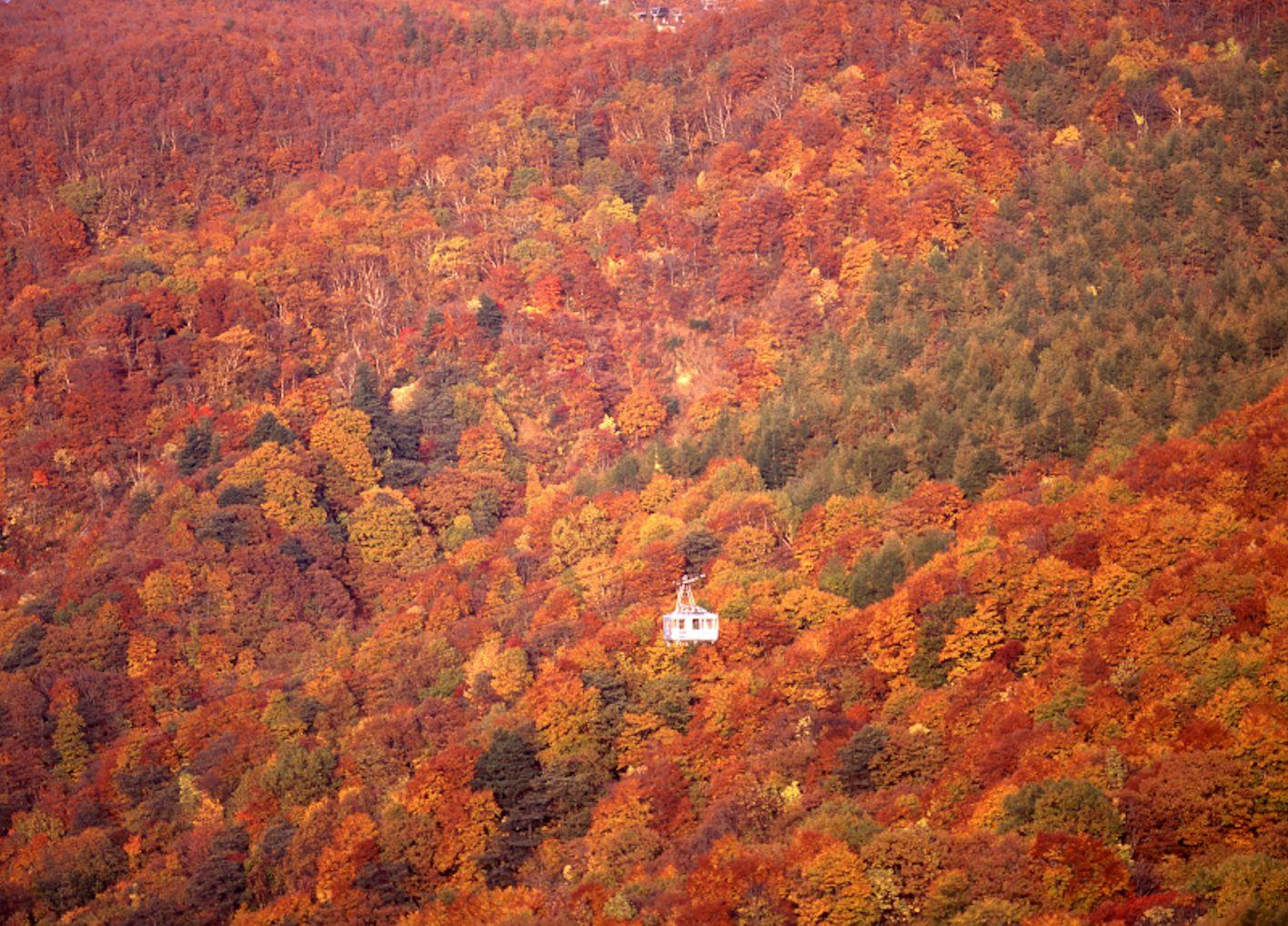 zao_autumn.jpg