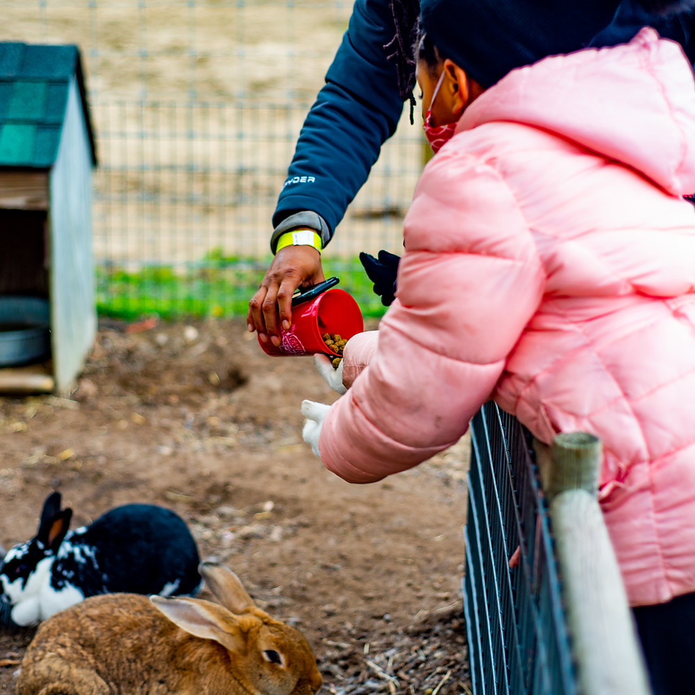 Lewis Farm Fall 2020