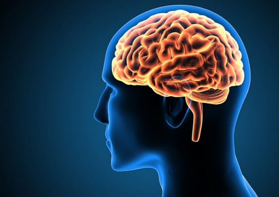 Food items you must eat to sharpen your brain