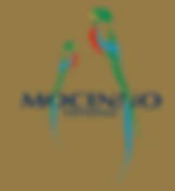 Mocinno International Logo