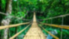 Amazon Rainforest Coya Wellness.jpg