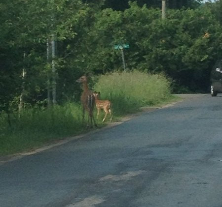 eight-mile-point-deer-2014.jpg