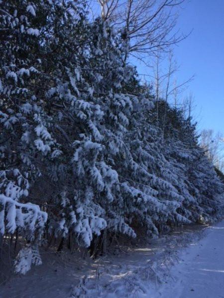 Winter-pic-2.jpg