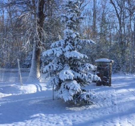 Winter-pic.jpg