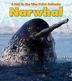 narwhals.jpg