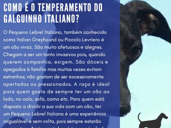 Como é o temperamento do Galguinho Italiano?