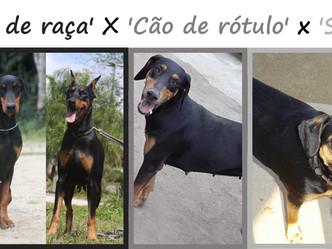 'Cães de raça' versus 'cães de rótulo'