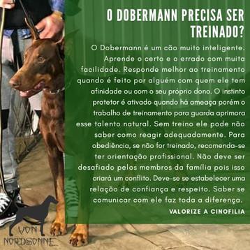 Treinamento do Dobermann
